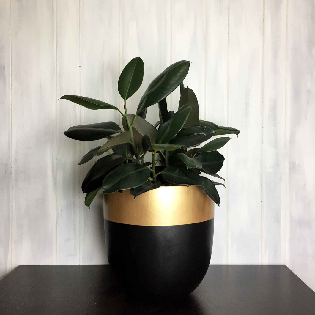 Black planter with gold colour blocking on rim