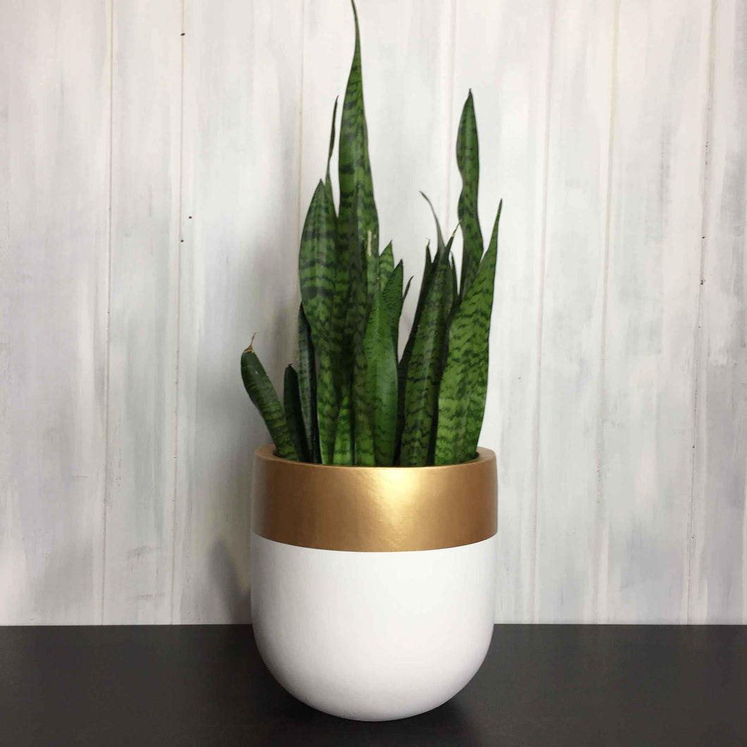 White Hand Painted Custom Modern Planter with gold rim on top edge