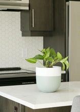 Sage green and white rim planter on kitchen counter top