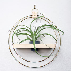 BRAID & WOOD PLANT SHELF | AIR PLANT WALL HANGER