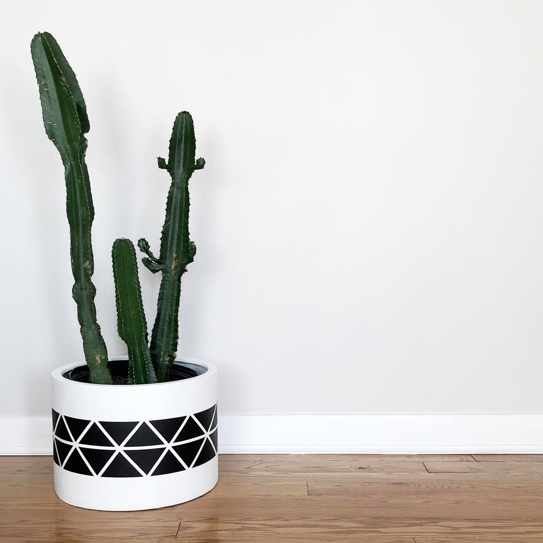 black hexagonal hand painted pattern on middle of a cylinder with a large Euphorbia Ingens