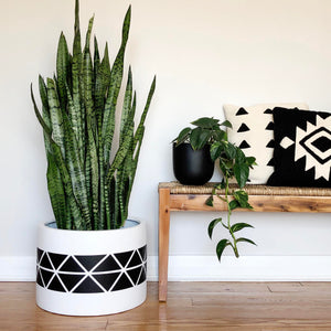 black triangle pattern on a low cylinder planter pot with a large snake plant.  Placed next to a rustic bench with modern pillows
