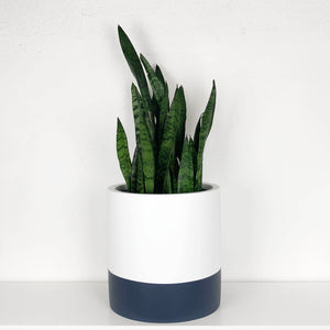 DIVIDED CYLINDER POT | PLANTER