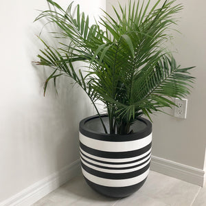 black and white striped plant pot with palm tree