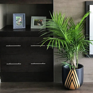 black and gold diamond pattern planter on floor with large majestic palm plant