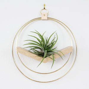 BRAID & WOOD V-HANGER | AIR PLANT WALL HANGER