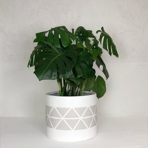 Low Cylinder planter pot with a warm grey toned triangular pattern painted on the planter pot.  A luscious Monstera Deliciosa plant makes a statement in this modern planter.