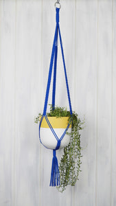 Royal Blue plant hanger with a Mustard rim planter with a white base
