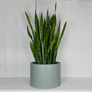LOW CYLINDER POT | PLANTER
