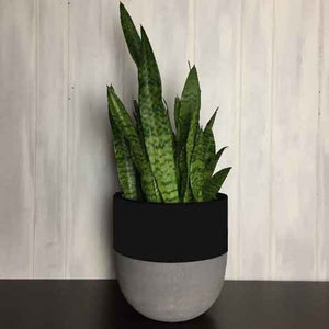 SPLIT POT | PLANTER