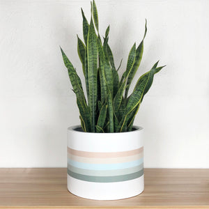soft pastel painted low cylinder with snake plant