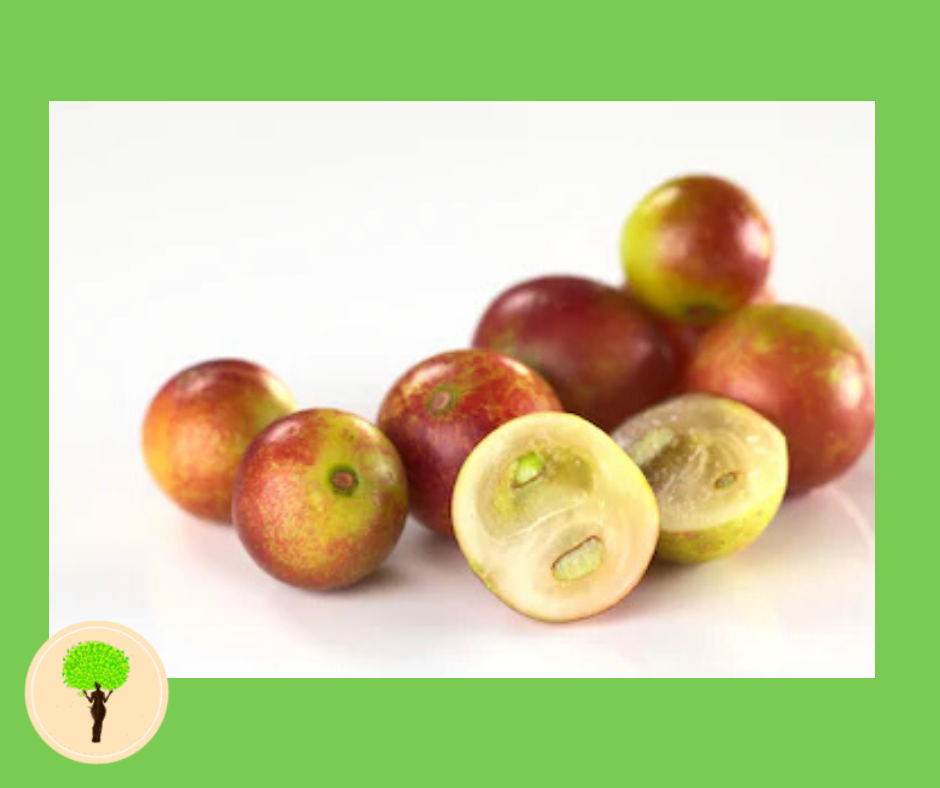 Benefits of Camu Camu? Here Are The 5 Facts