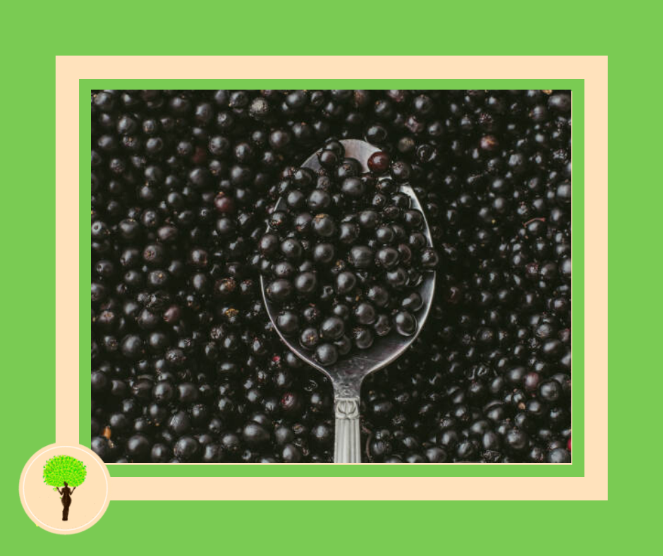 The Truth About the Effectiveness of Elderberry in Colds and Flu