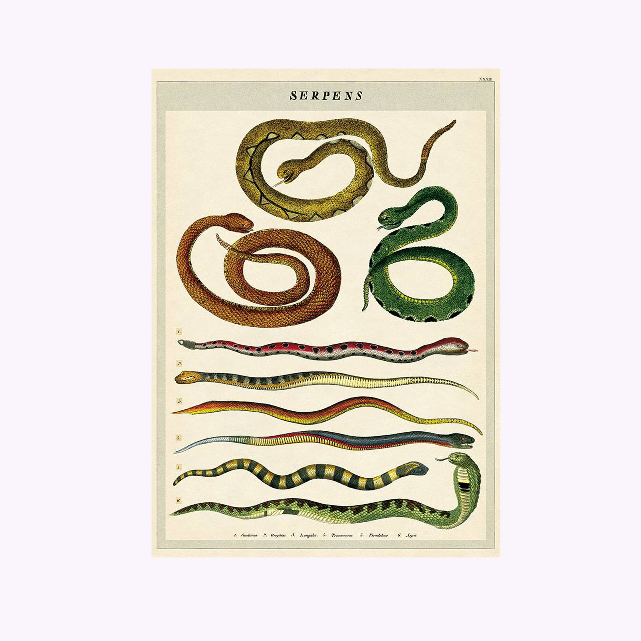 "Affiche ""Serpents"""