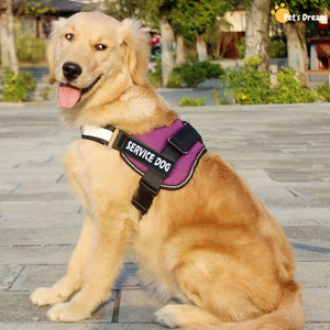 Pro All-In-One Sturdy No-Pull Dog Harness
