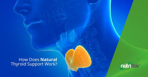 How Does Natural Thyroid Support Work?