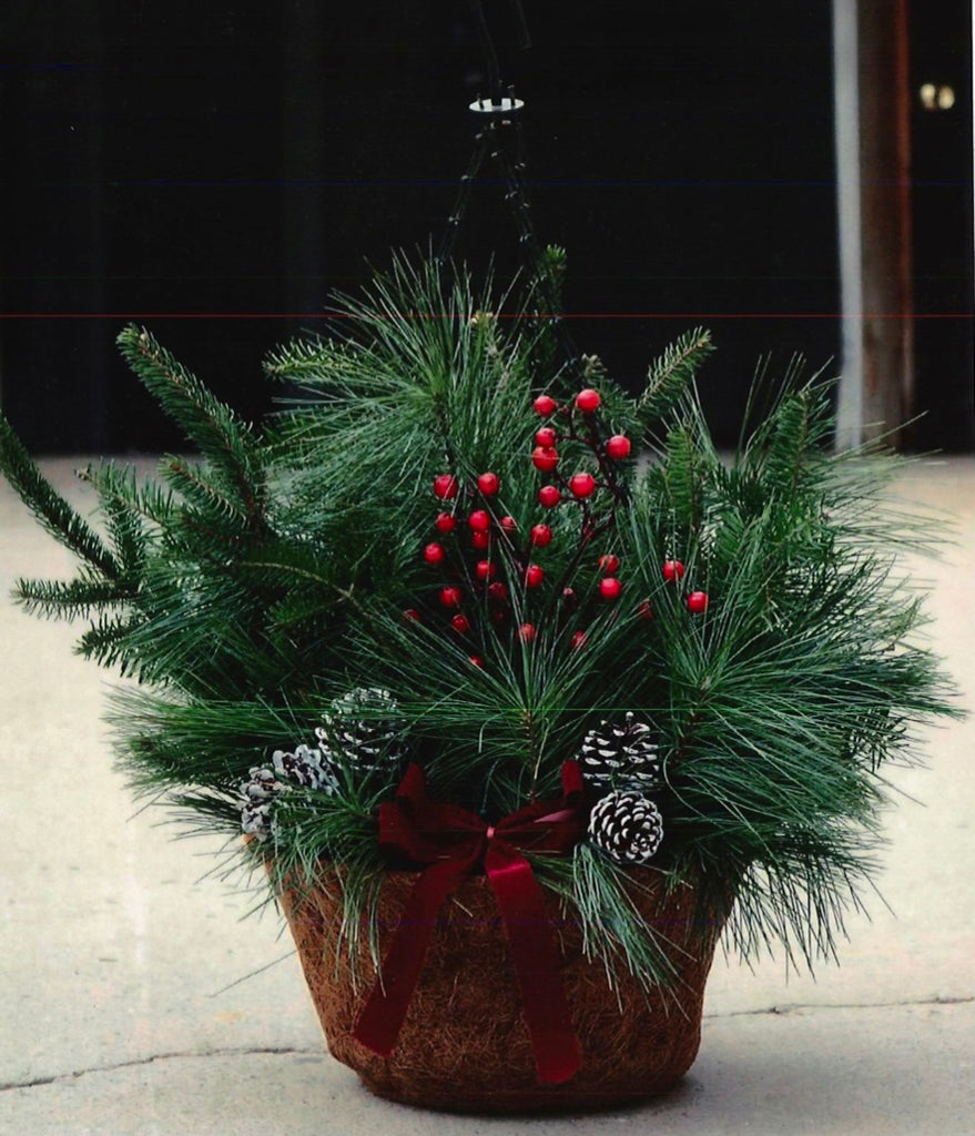 "12"" Coco Fiber Lined Evergreen Hanging Basket"