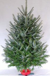 3'  Canaan Fir Christmas Tree With Stand