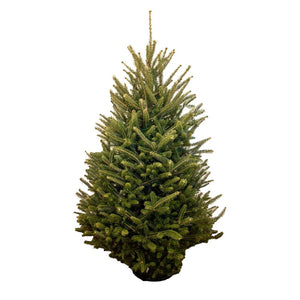 3-4' Fraser Fir Christmas Tree With Stand