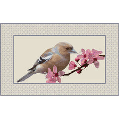 Chaffinch and Cherry Blossom