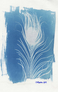 FeatherCyanotypes 10