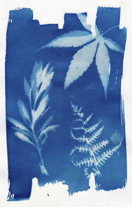 Floral_arrangement4_cyanotype