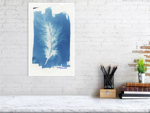 FeatherCyanotypes 11