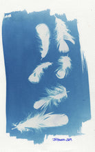 Load image into Gallery viewer, FeatherCyanotypes 13