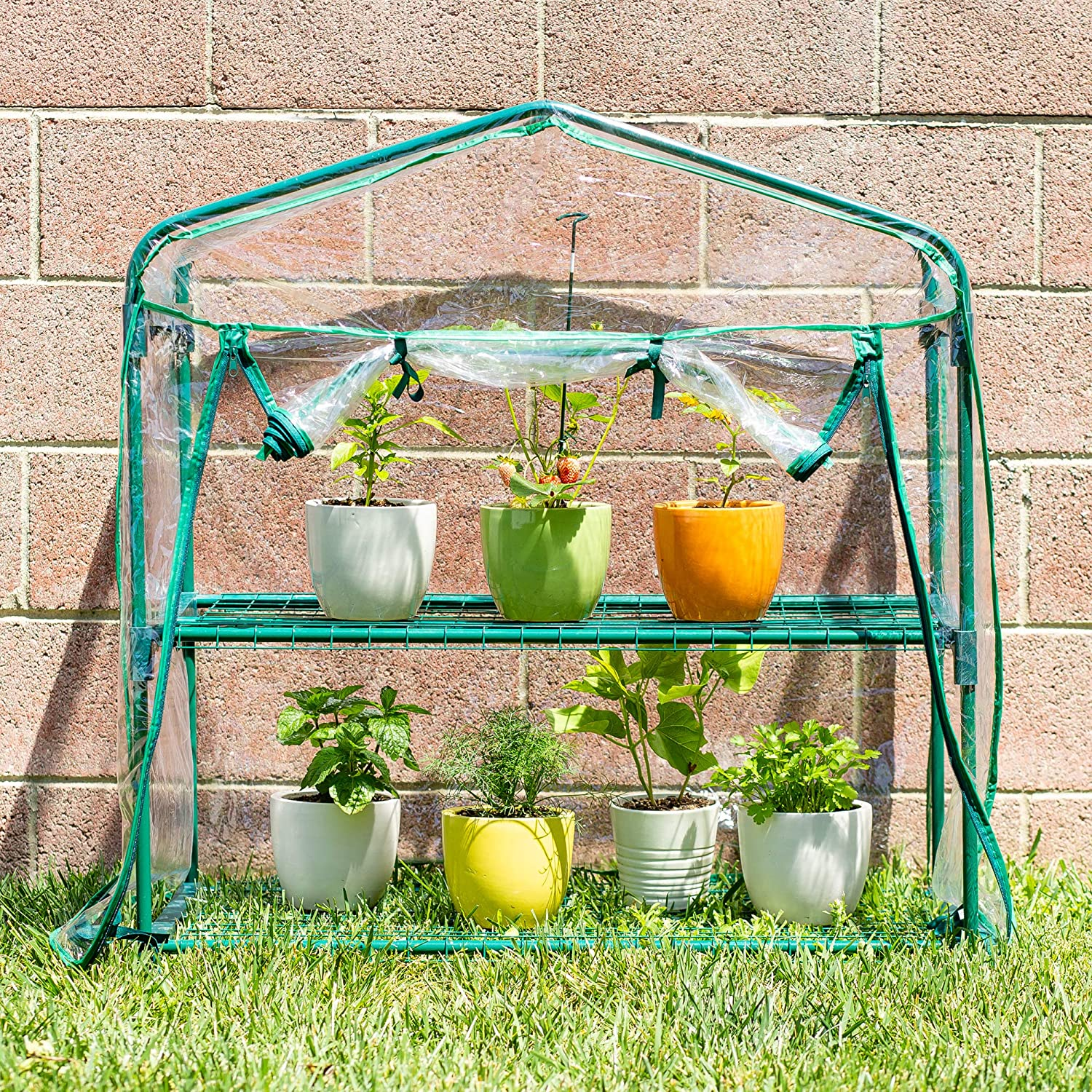 Educational Small Green House DIY Mini Indoor Little Greenhouse Indoor/Outdoor - Morealis