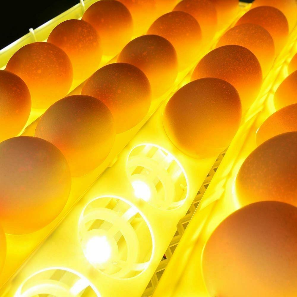 Automatic Egg Incubator Automatic Chicken Quail Egg Hatcher - Morealis
