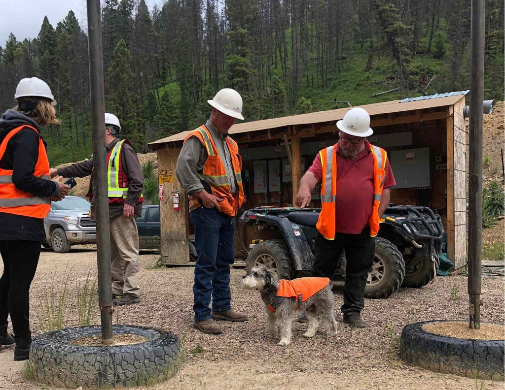 Potentate Sapphire Mine in Montana for Montana Sapphires with Mine Dog
