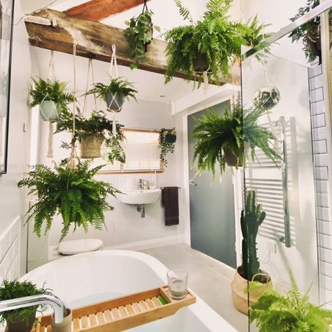 Minimalist bathroom with plants