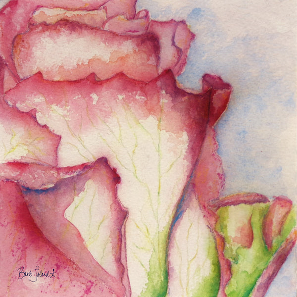 A watercolor painting of a rose with petals outstretched, as if hoping for its dreams to come true.
