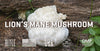 Ingredient Spotlight: Lion's Mane Mushroom