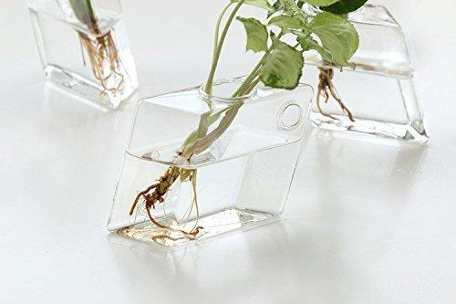 Mkono 2 Pcs Wall Mounted Glass Vase - Paruse