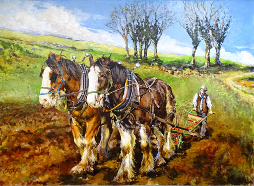 Eamon Ploughing with Bobo & Clyde