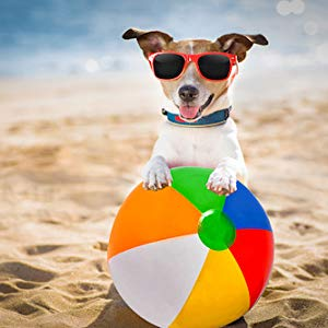dog playing with beach ball