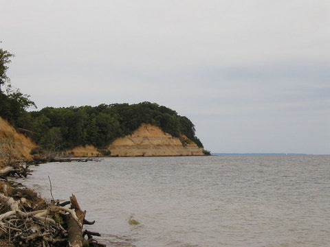 For fossils and sightseeing, Calvert Cliffs State Park is an amazing destination. (Credit: Alex Zorach on Wikipedia)
