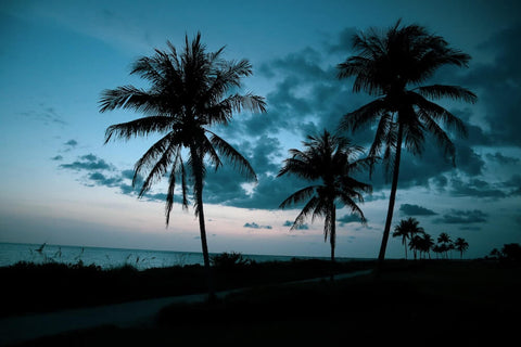 Captiva Island offers unparalleled natural beauty.