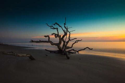 When visiting Jekyll Island, be sure to check out Driftwood Beach.