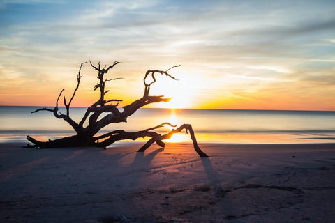 Georgia is home to some of the most beautiful beaches in the U.S., such as Driftwood Beach on Jekyll Island, pictured above.