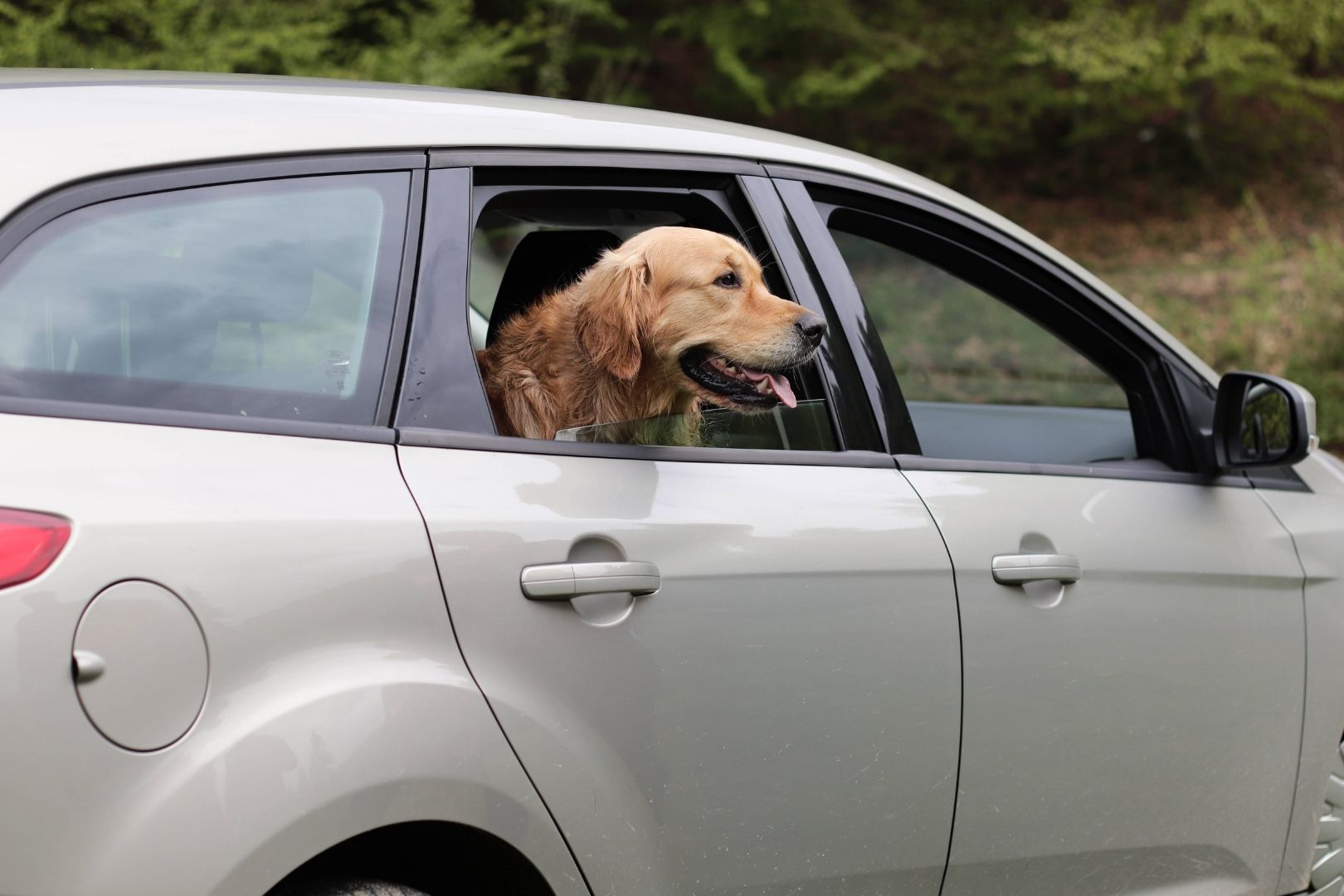 My Dog Gets Car Sick | How to Travel With Your Dog | 5 Top Tips