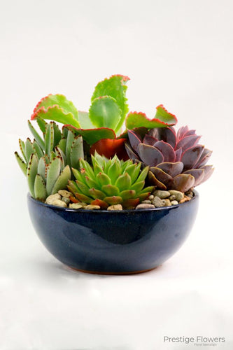Succulents In A Pot Cacti And Plants