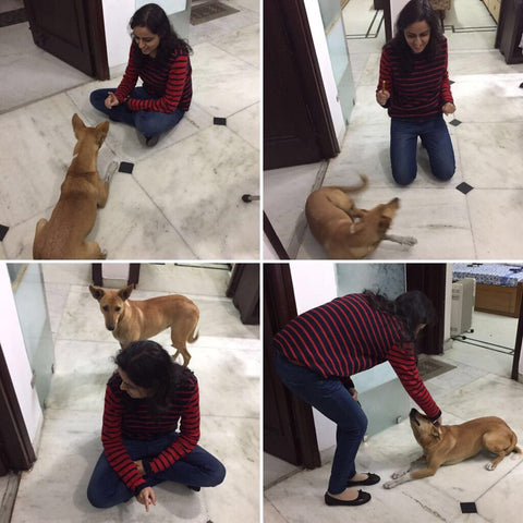 pampering dogs at home