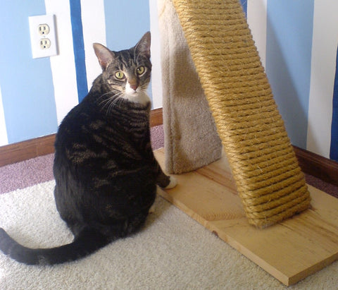 cat care- scratching post for cats