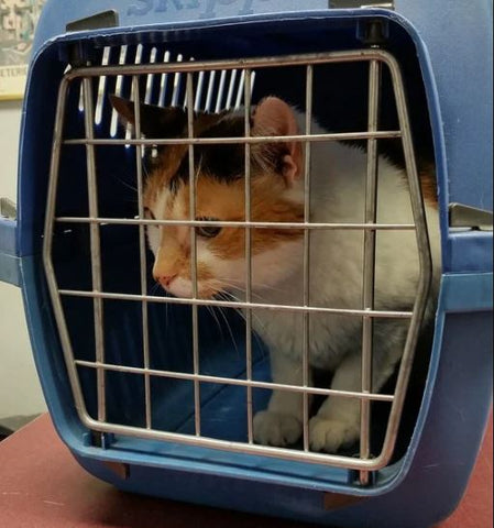 cat care tips - using a cat carrier