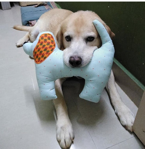 dog playing with toy cushion