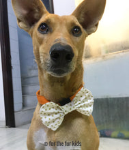 Load image into Gallery viewer, Bow Ties for Dogs: Star of the Show