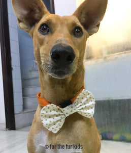 Bow Ties for Dogs: Star of the Show