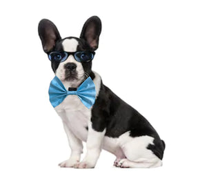 Bow Ties for Dogs: Blue Occasion Wear Bow Tie for Pets